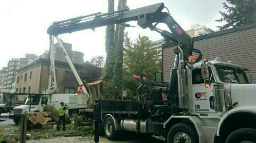 Photo Credit: Morgan B. | Moving Trees